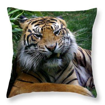 I Don't Always Throw Pillow