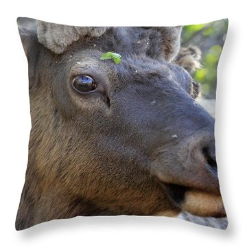 I Have What On My Face? Throw Pillow