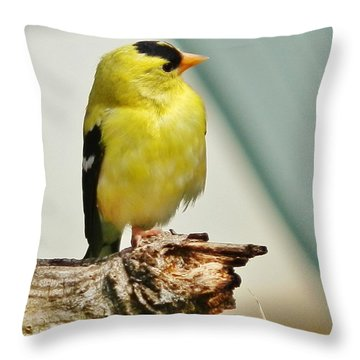 I Hear My Girl Throw Pillow by VLee Watson