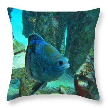 I Hung Up On Them Throw Pillow by John Malone