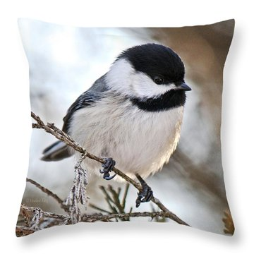 Throw Pillow featuring the photograph I May Be Tiny But You Should See Me Fly by Heather King