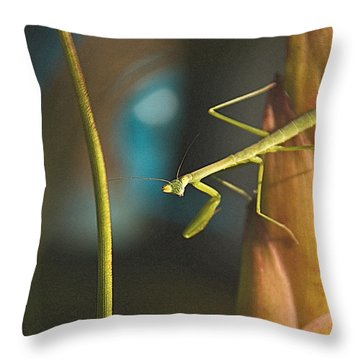 I Pray For You... Throw Pillow by Tammy Schneider