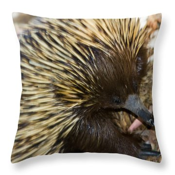 Throw Pillow featuring the photograph I See Some Ants by Miroslava Jurcik