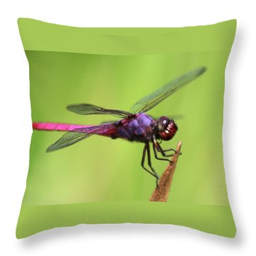 Dragonfly - I See You Throw Pillow