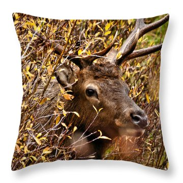 I See You Throw Pillow by Steven Reed