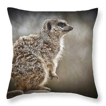 I Spy A Meerkat Throw Pillow