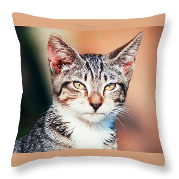 Catitude Throw Pillow by Belinda Lee