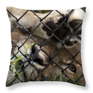 I Want To Go Home - Female African Lion Throw Pillow