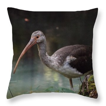 Ibis Cute Face Throw Pillow
