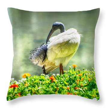Ibis  Throw Pillow