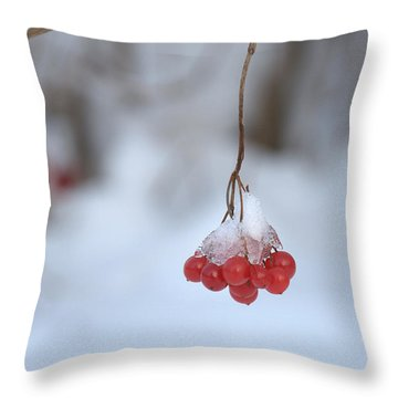 Throw Pillow featuring the photograph Ice Berries by Sabine Edrissi