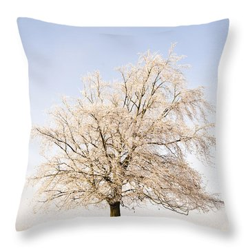 Iced Tree Throw Pillow by Anne Gilbert