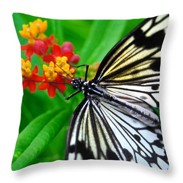 Idea Leuconoe Throw Pillow by Carsten Reisinger