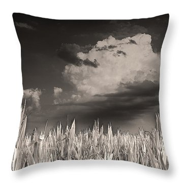 If You Build It He Will Come Throw Pillow by William Fields