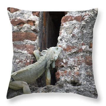Throw Pillow featuring the photograph Iguana by David S Reynolds