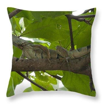 Iguana In Tree Throw Pillow by Dan Friend