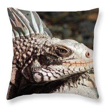 Iguana Throw Pillow by Jodi Terracina