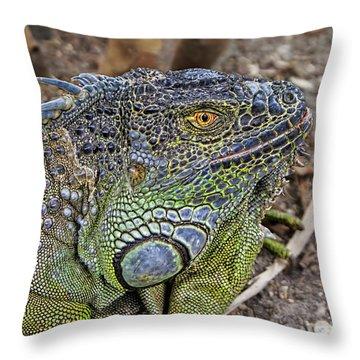 Throw Pillow featuring the photograph Iguana by Olga Hamilton