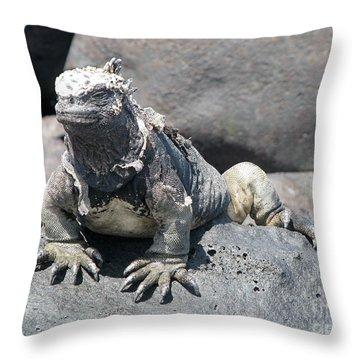 Iguana Or Prehistory Survivor Throw Pillow