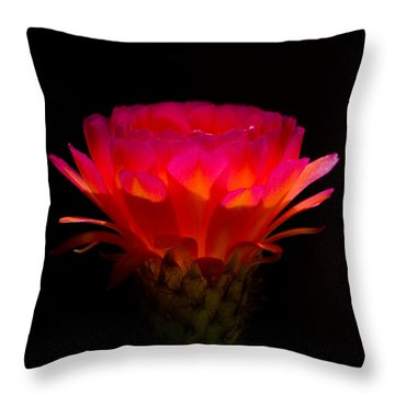 Illumination Throw Pillow by Rick Furmanek