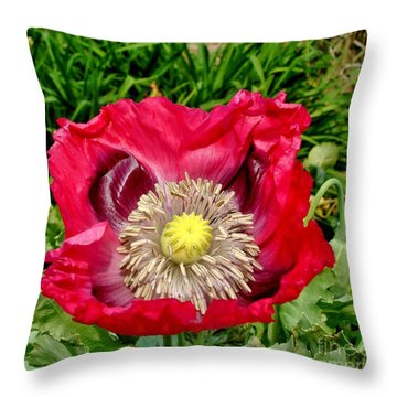 Throw Pillow featuring the photograph Do I Look Angry? by Katy Mei