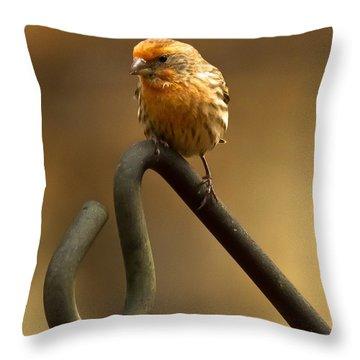 I'm Orange Throw Pillow