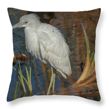 Immature Little Blue Heron Throw Pillow
