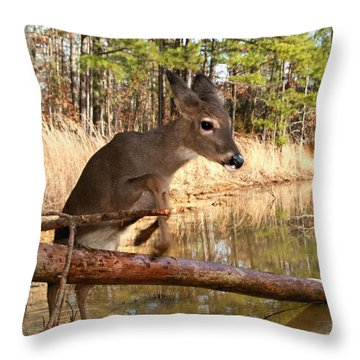 In A Flash Throw Pillow by Bill Stephens
