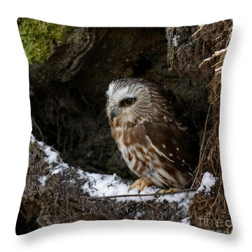 In Hiding Saw Whet Owl In A Hollow Stump Is Part Of The Birds Of Prey Fine Art Raptor Wildlife Photo Throw Pillow by Inspired Nature Photography Fine Art Photography