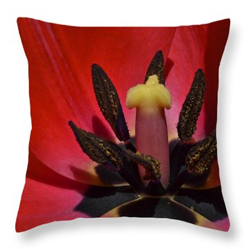 In The Corner Throw Pillow by Frozen in Time Fine Art Photography