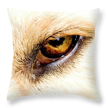 Throw Pillow featuring the photograph In The Eyes.... by Rod Wiens