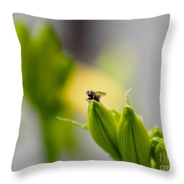 In The Garden - The Champ Throw Pillow