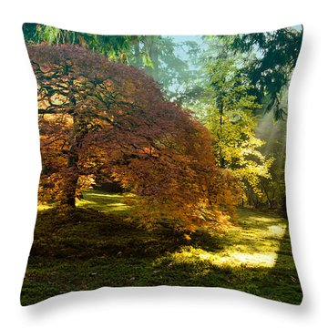 In The Gentle Autumn Light Throw Pillow by Don Schwartz