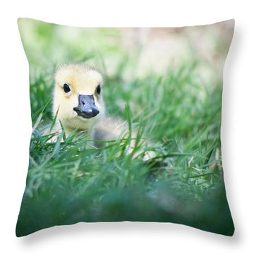Throw Pillow featuring the photograph In The Grass by Priya Ghose