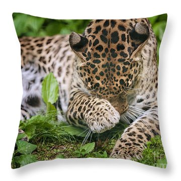 In The Moment Throw Pillow by Mary Lou Chmura