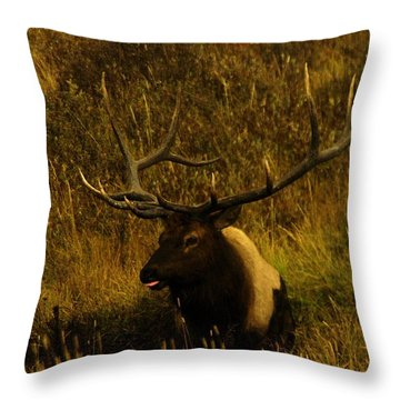In The Mudhole Throw Pillow by Jeff Swan