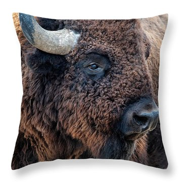 Throw Pillow featuring the photograph Olena Art Bison The Mighty Beast Bison Das Machtige Tier North American Wildlife  by OLena Art Brand