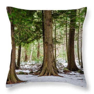 Throw Pillow featuring the photograph In The Thuja Forest by Kennerth and Birgitta Kullman