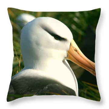 Throw Pillow featuring the photograph In Waiting by Amanda Stadther