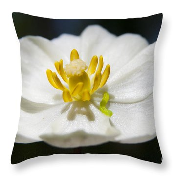 Inchworm  Throw Pillow by Jeannette Hunt