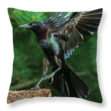 Incoming Grackle Throw Pillow
