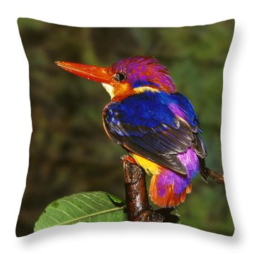 India Three Toed Kingfisher Throw Pillow by Anonymous