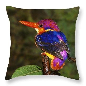 India Three Toed Kingfisher Throw Pillow