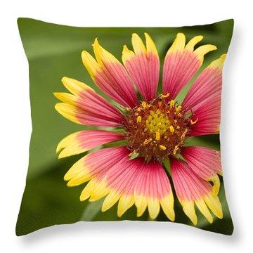 Indian Blaket Bloom Throw Pillow