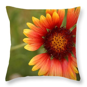 Indian Blanket Flower Throw Pillow