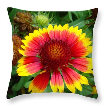 Indian Blanket Flower Throw Pillow by Sue Melvin