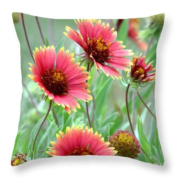 Indian Blanket Wildflowers Throw Pillow