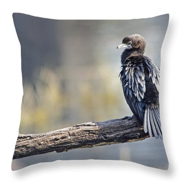 Indian Cormorant Throw Pillow