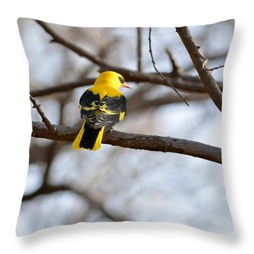 Indian Golden Oriole Throw Pillow by Fotosas Photography