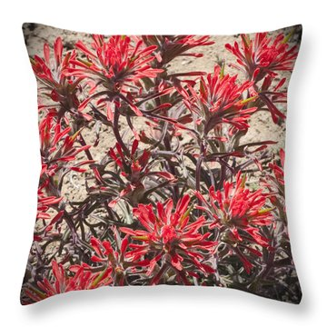 Throw Pillow featuring the photograph Indian Paint Brush by Daniel Hebard